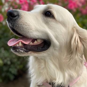 Dolly, PhD in Cuteness